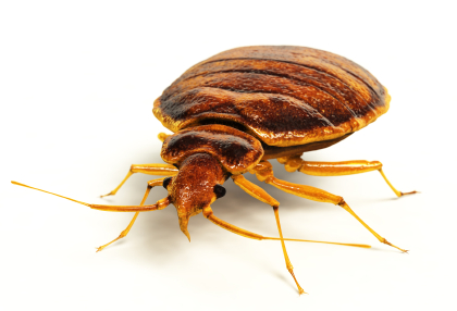 Affordable Exterminator Services In Nj A Academy