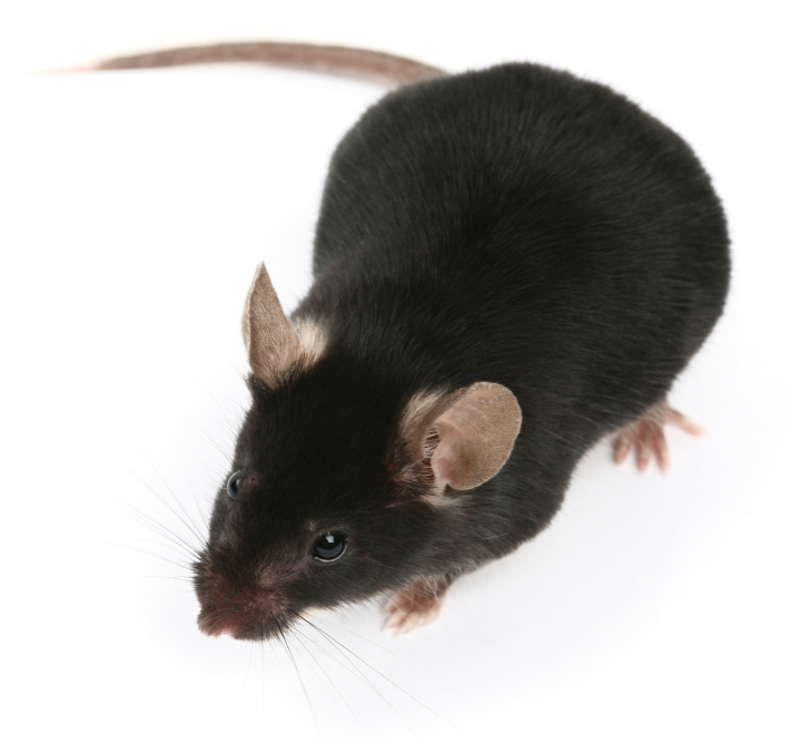 Fall Pest Control In Middletown Nj Rodent Amp Cricket